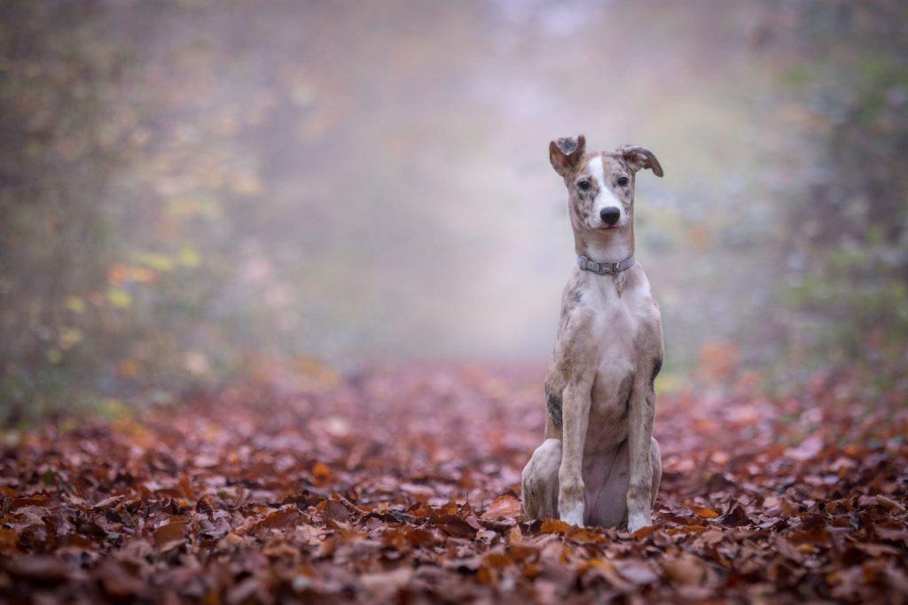 hond-in-bos