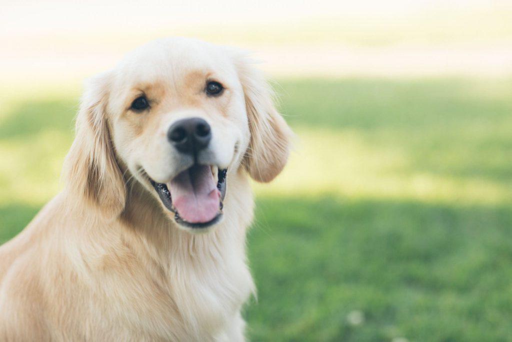 hond-technieken