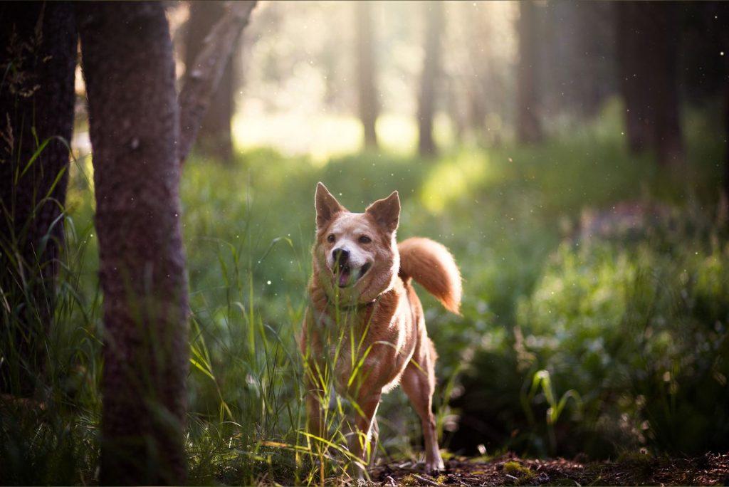 nieuwe-dieren-bosrijke-omgeving