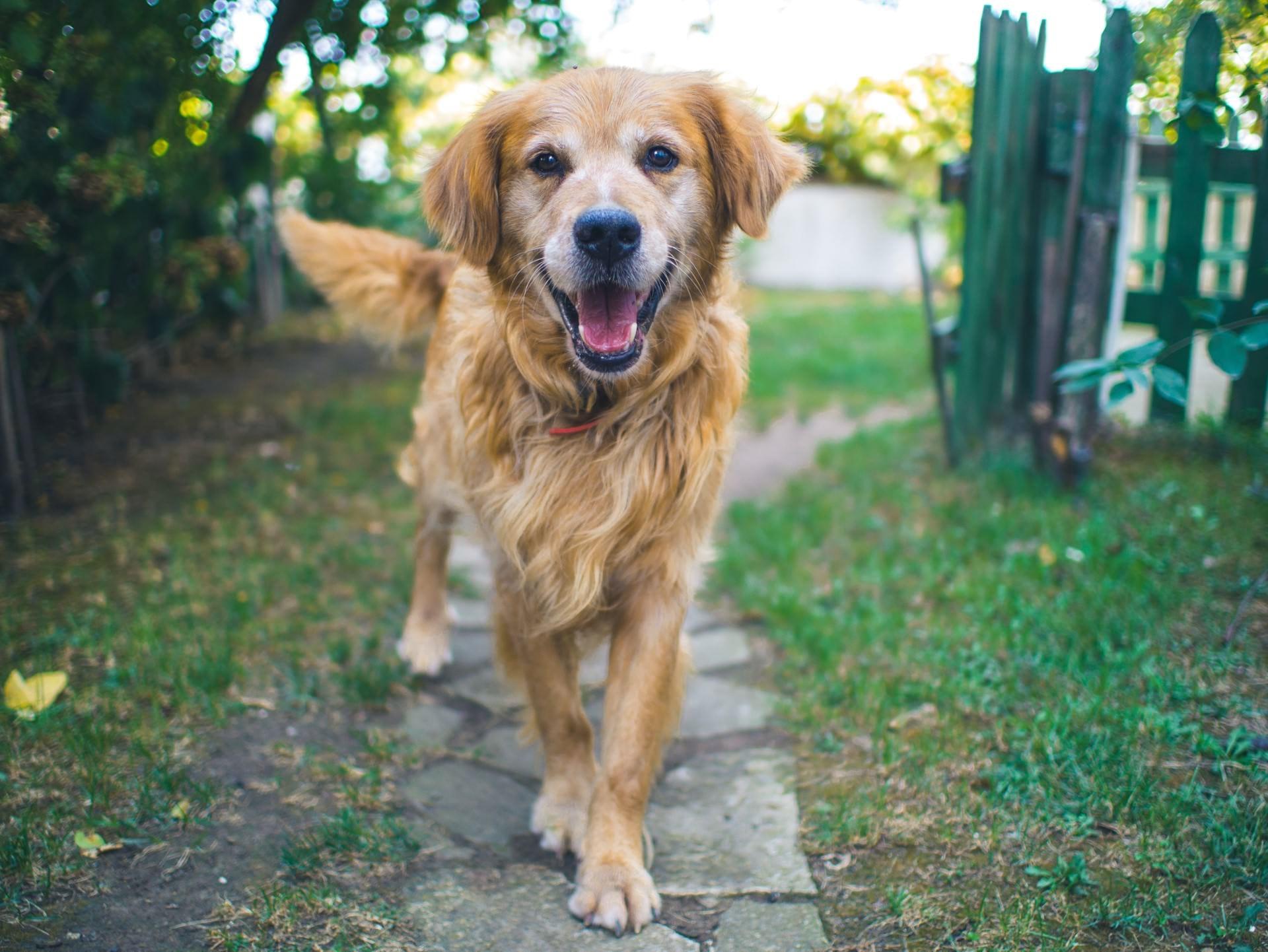 nieuwe-dieren-senior-hond