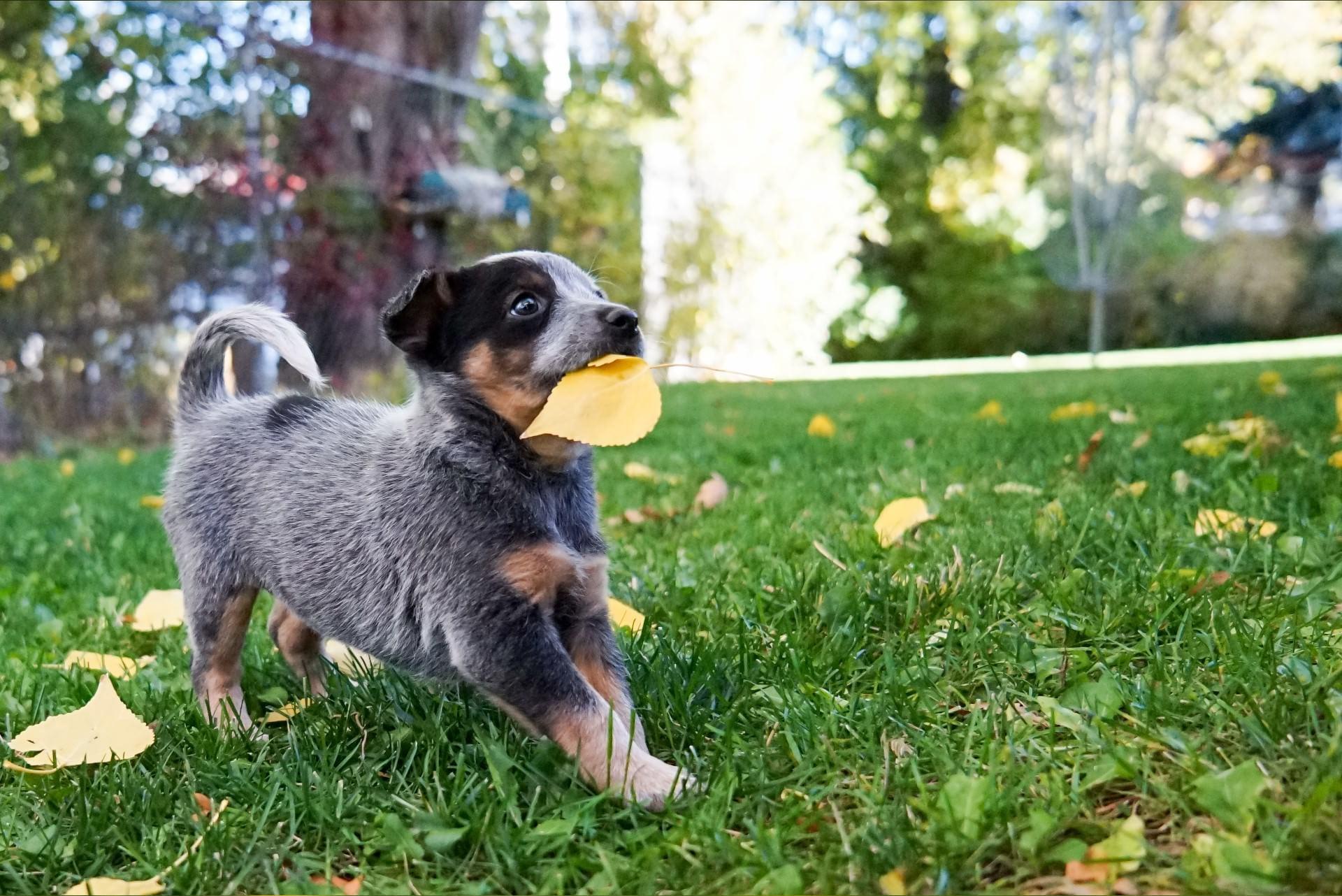 nieuwe-dieren-spelende-pup