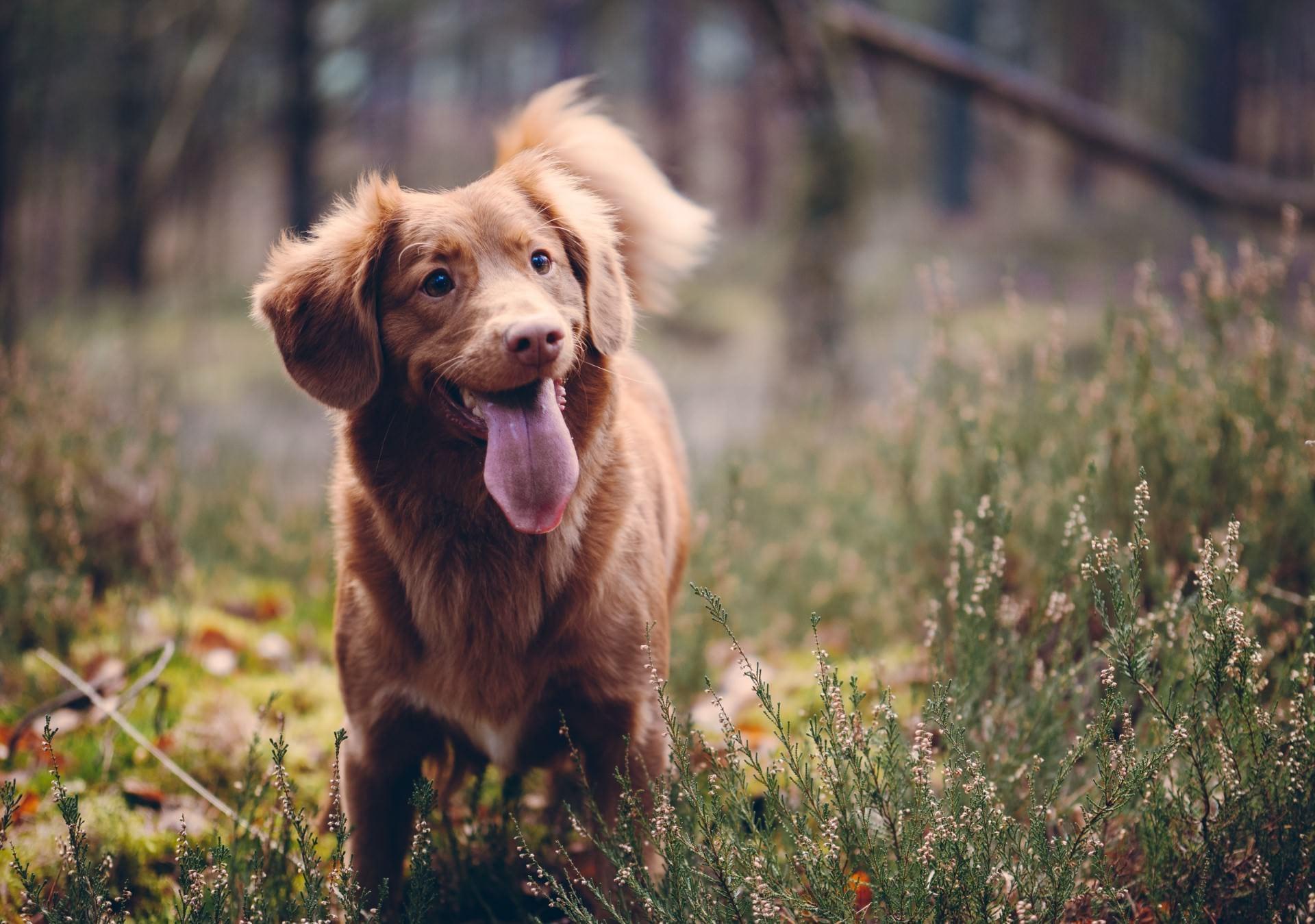 nieuwe-dieren-hond-in-bos