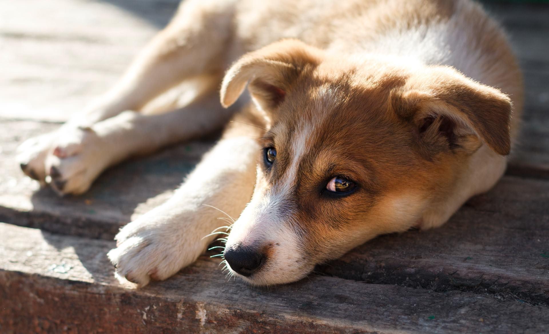 nieuwe-dieren-liggende-pup