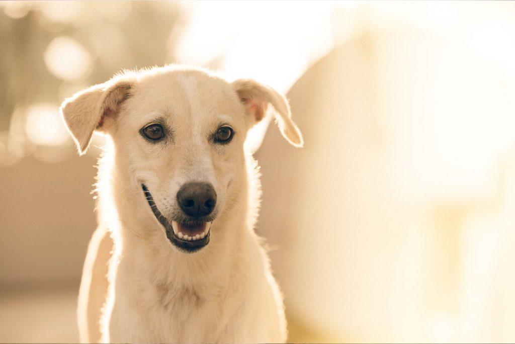 hond-healing