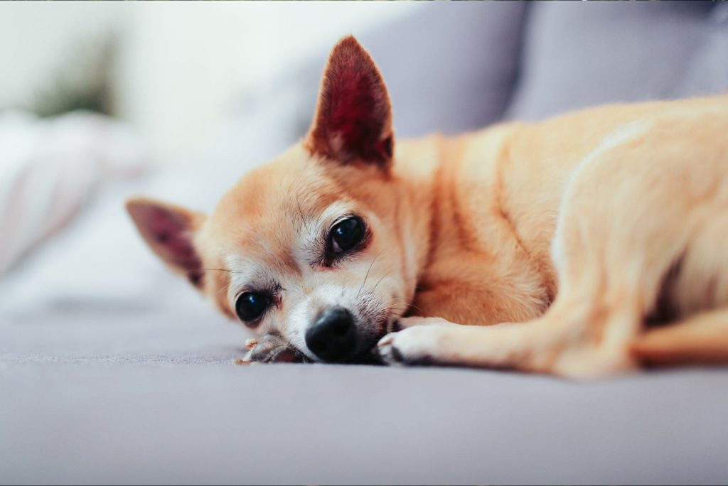 hondenpension-verblijf-slapen