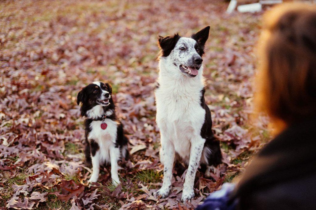 honden-gesprek