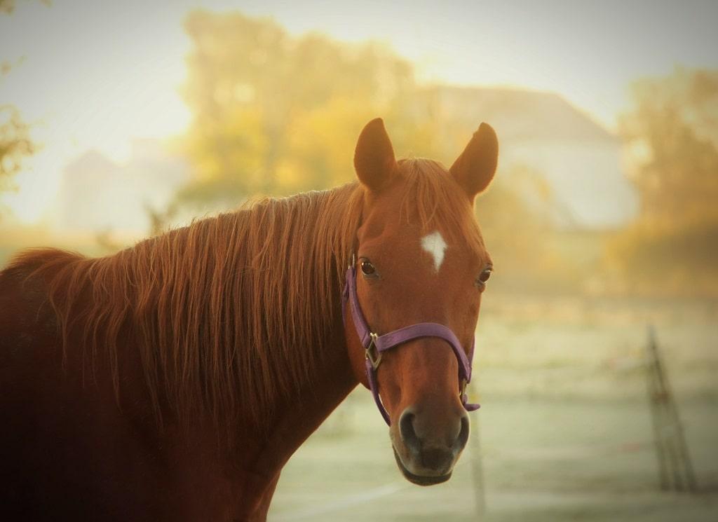 bruin-paard-buiten